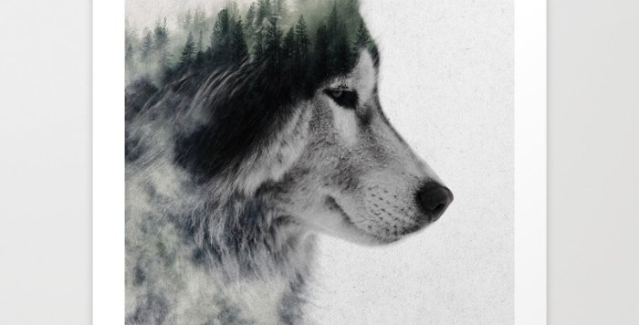 Wolf Stare - Andreas Lie