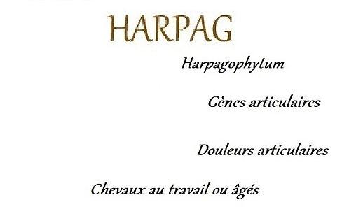 Harpag esprit horse cheval soin plante phyto harpagophytum articulation douleur locomotion