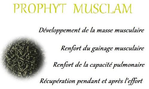 esprit horse prophyt musclam devoloppement musculaire gainage récupération chien phyto