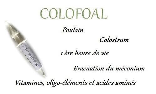 esprit horse colofoal poulain colostrum naissance chevaux phyto