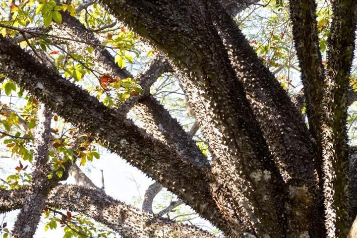 guided_nature_hike_samara_costa_rica_inf