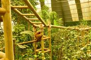 sloth_sanctuary_tour_3.jpg