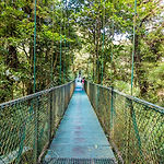 83337259-hanging-bridges-in-cloudforest-