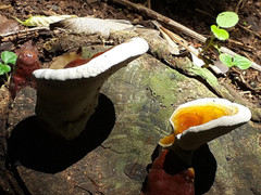 mushrooms-samara-trails-11.jpg
