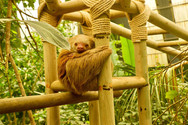 sloth_sanctuary_tour_1.jpg