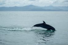 delfines en samara_147.jpg