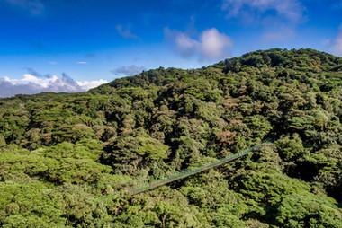 Treetop-Walkways-Selvatura-Park-1.jpg