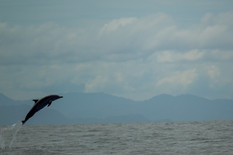 delfines en samara_231.jpg