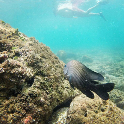 Sea Quest Snorkel 6.jpg