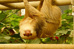 sloth_sanctuary_tour_2.jpg