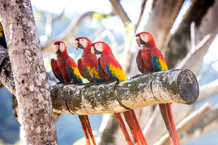 macaw_recovery_network_09__c3578c8534a5e