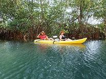 Samara-Wildlife-Mangrove-Kayak-Tour-1.jp