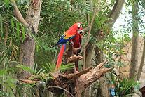 parrot-2708093_1920.jpg