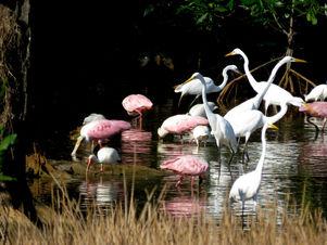 Palo Verde wetland boat tour
