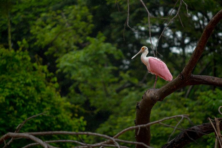 Wildlife & Mangrove Kayak 2.jpg