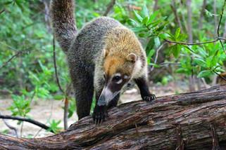 costa-rica-nature-pizote-668414.jpg
