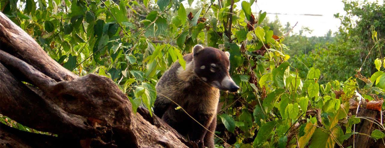 Samara-Trails-Nature-Hiking-Costa-Rica-4