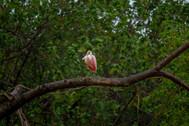 manglares_60.jpg