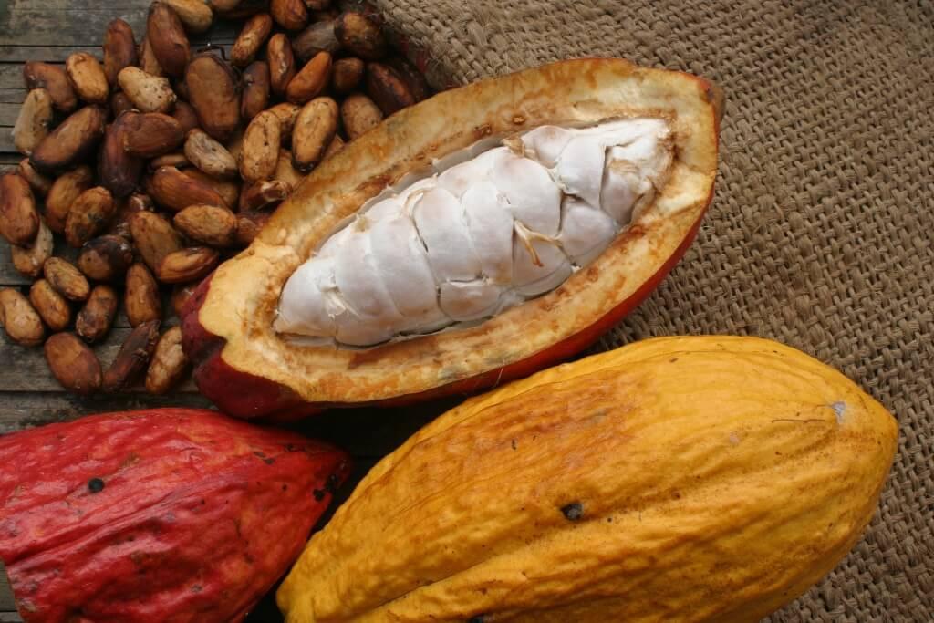 Cacao-2.jpg