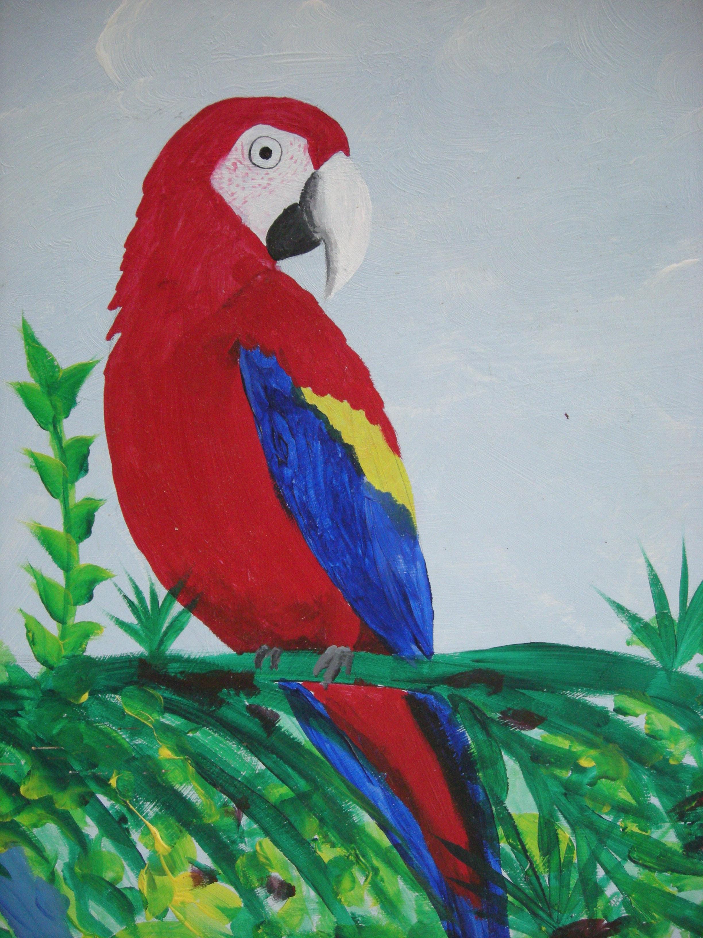 Parrot #3