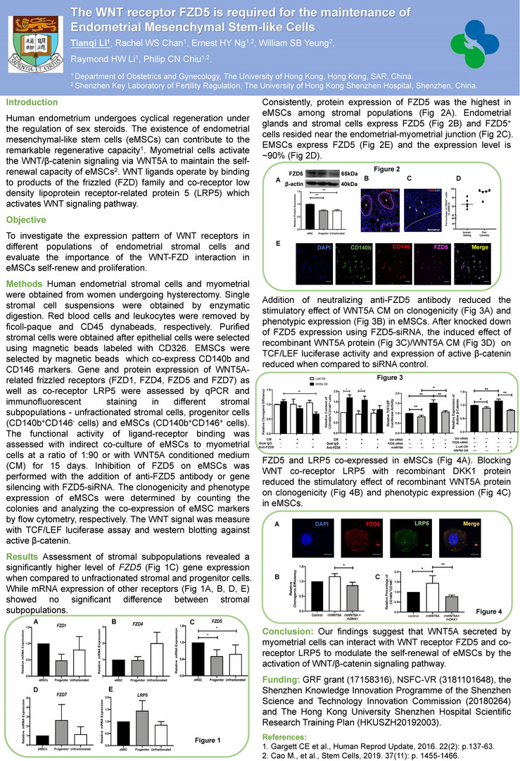 P03 The WNT receptor FZD5 is required for the maintenance of Endometrial Mesenchymal Stem-like Cells