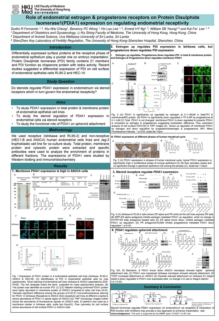 P02 Role of endometrial estrogen and progesterone receptors on Protein Disulphide Isomerase 1 (PDIA1) expression on regulating endometrial receptivity