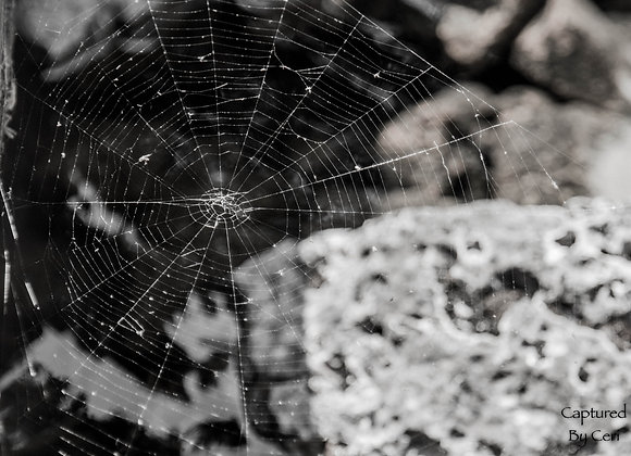 Bookmark - Spider Web