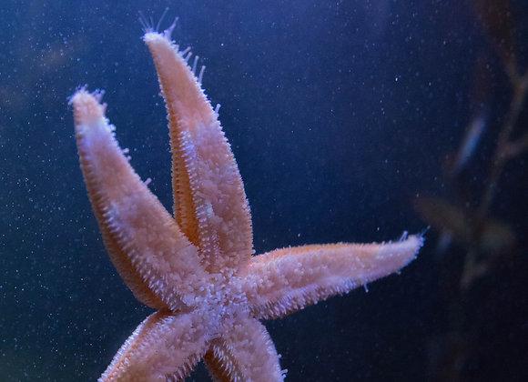 Bookmark - Starfish