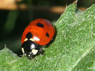 Με κοιτάς...σε κοιτώ - Ένα...φυσικό εντομοκτόνο.