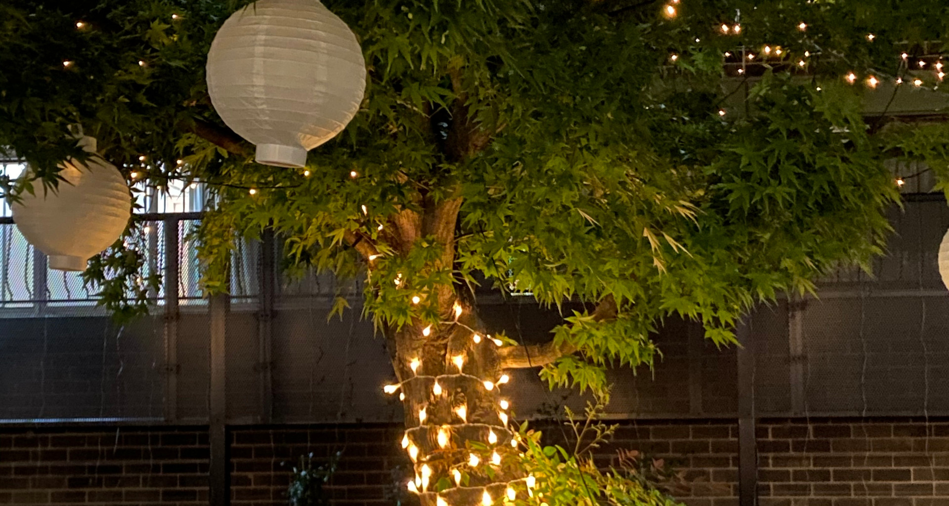 Tree with fairy lights and lanterns