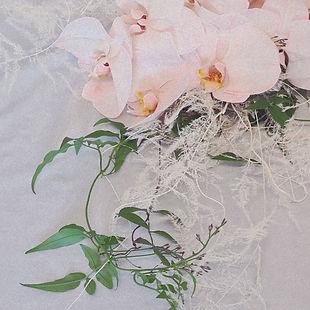 orchids banner.jpg