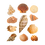 Thumbnail: Seashells