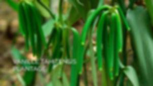 2 VANILLA PLANTATION_DE.jpg