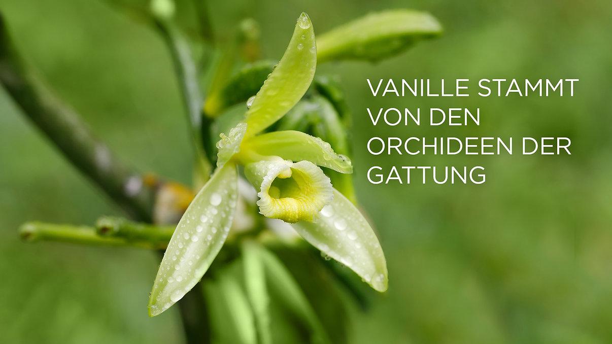 1 VANILLA FLOWER_EN.jpg