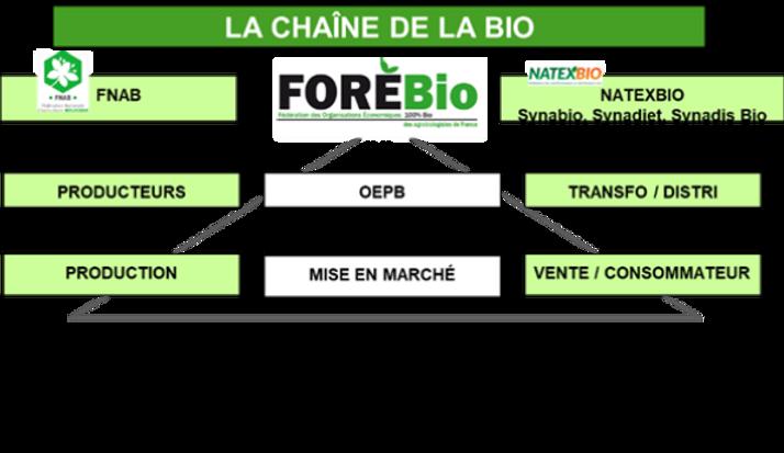 CHAINE DE LA BIO.png