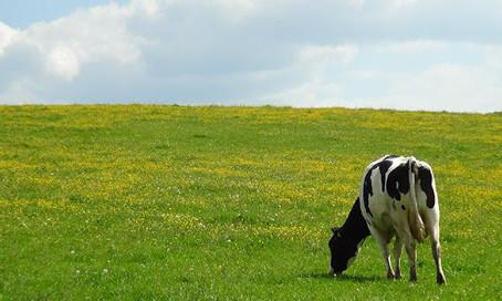 Vers une autonomie alimentaire des fermes Forébio