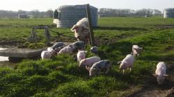 Porcs Bio