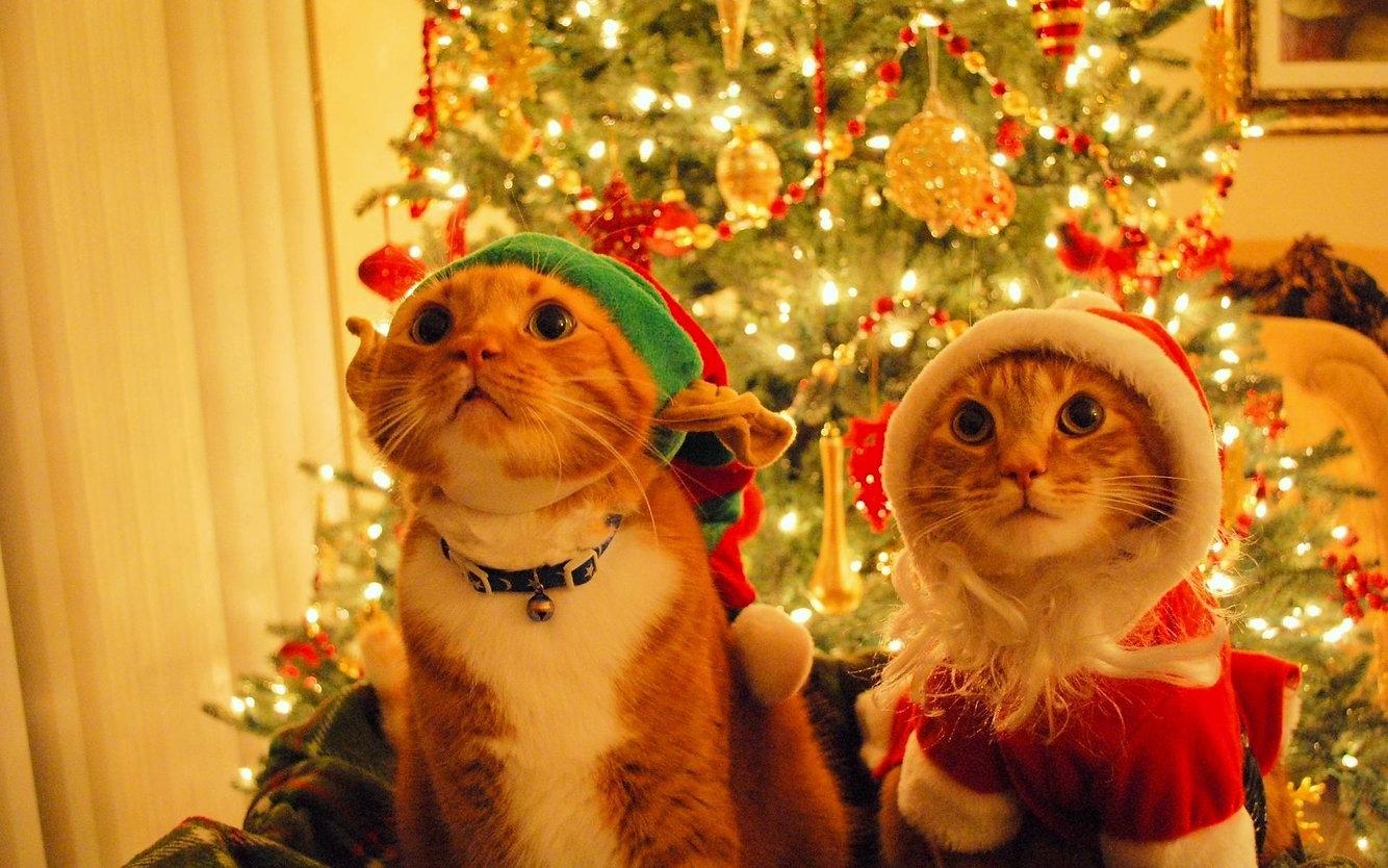 joyful-christmas.jpg