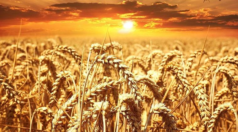 Gift of Bread.jpg