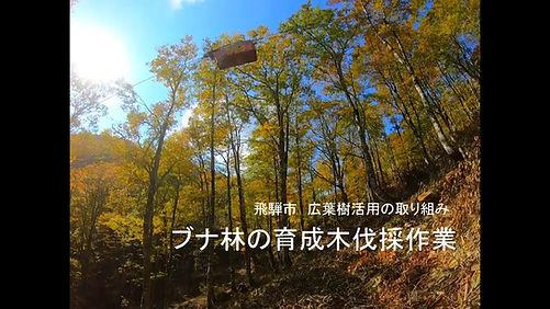 飛騨市ブナ林サムネ.jpg