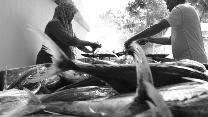 fishing (Large).jpg