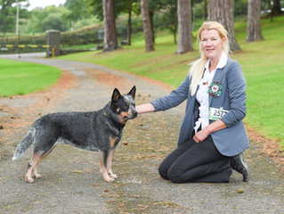 Roxy wins again at Working & Pastoral Breeds of Wales
