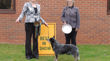 BEST IN SHOW 4 YEARS RUNNING!