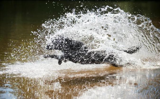 Vesipelastus treeneistä kuva