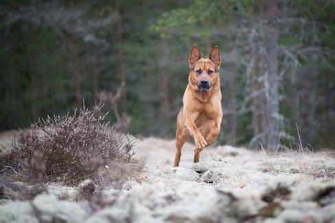 Rocky vauhdissa koirakuvauspäivässä