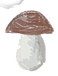 гриб.png