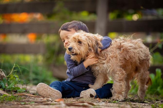 כלבים רגישים מטפלים