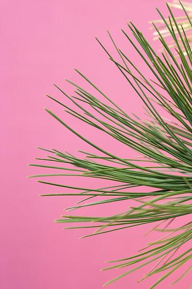 fondo rosa con planta