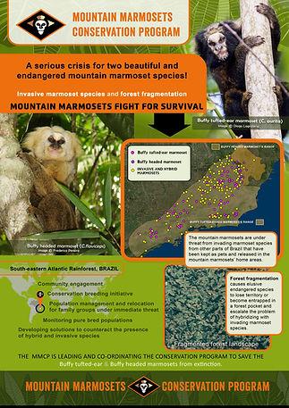 mountain marmosets poster.jpg