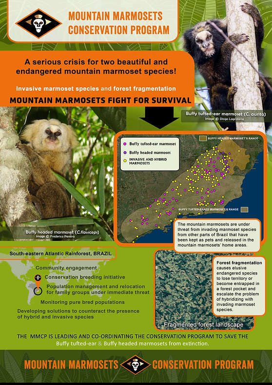 mountain marmosets poster.jpg